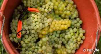 Unbekannte stehlen zehn Tonnen Weintrauben in Lauffen am Neckar - BNN - BNN - Badische Neueste Nachrichten