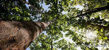 Explodierende Holzpreise: Welche Investments zum Einstieg locken