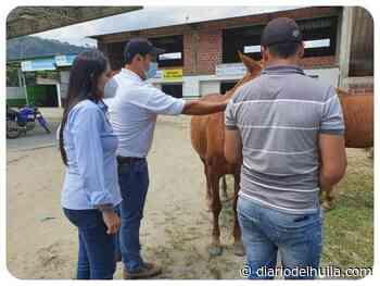 Vacunados equinos contra la encefalitis venezolana en Campoalegre y Garzón - Diario del Huila