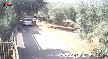 Agguato per debito di droga a Sannicandro di Bari, due arresti - Puglia News 24