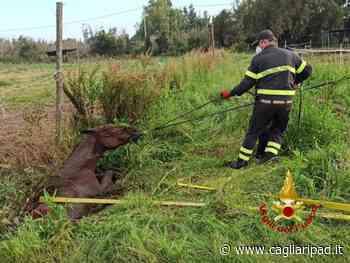 Cavallo cade in un fosso a Santa Giusta: soccorso e salvato dai Vigili del fuoco - Cagliaripad