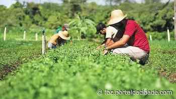 Pequenos agricultores se organizam e criam nova cooperativa em Foz do Iguacu - ® Portal da Cidade   Foz do Iguaçu