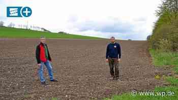 Marsberg: So helfen Landwirte Bienen mit ihrer Ackerfläche - Westfalenpost