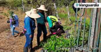 Mujeres lideran procesos de reforestación en Barichara - Vanguardia