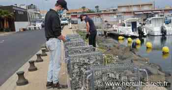 Marseillan - Les Nurseries à poissons réinstallées dans les ports - HERAULT direct