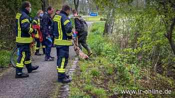 Tiere in Elbe-Elster: Reh in Bad Liebenwerda starb nicht an einem Schuss - Lausitzer Rundschau