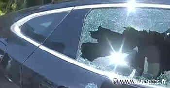 La police casse une vitre pour tenter d'extraire un chien enfermé dans une voiture au soleil à plus de... - Woopets