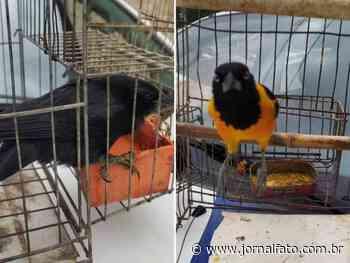 Polícia resgata sete aves silvestres de cativeiro ilegal em Ibatiba - Jornal FATO