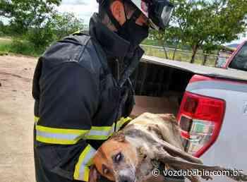 Itaberaba: Após cair em esgoto, cadela precisa ser resgatada - Voz da Bahia