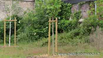 Le Petit-Quevilly : la première mini-forêt urbaine s'enracine - Paris-Normandie