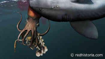 Descubren fósil de un calamar que hace 180 millones de años fue cazado por un tiburón mientras se comía una langosta - Red Historia
