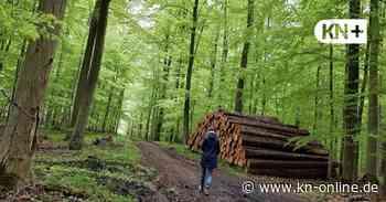 Letzte Ruhe unter Bäumen: In Altenholz-Knoop soll Bestattungswald entstehen - Kieler Nachrichten