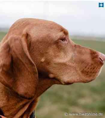 Unbekannte sollen Tier in Dinklage Gift gegeben haben: Wahrscheinlich vergifteter Hund eingeschläfert - Nordwest-Zeitung