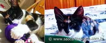 Gatinha Nala desapareceu em Itirapina. Ajude a encontrá-la - São Carlos Agora