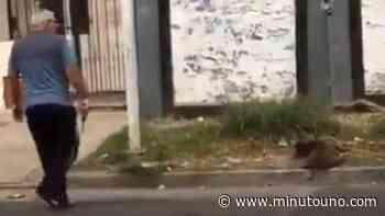 Intentaron linchar al asesino de un perro callejero en San Justo - Minutouno.com