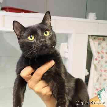Campanha 'Adote um Amigo' tem gatos para adoção em Cerquilho - G1