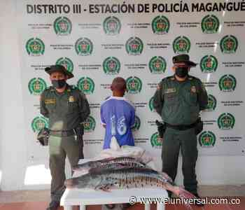 Capturado por violar veda del bagre rayado en Magangué - El Universal - Colombia