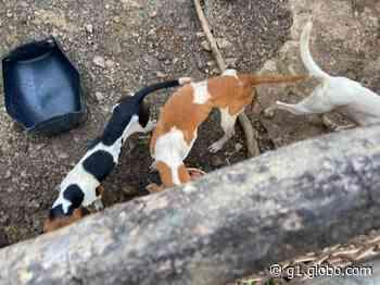 Homem é indiciado por maus-tratos a animais em Tapira; polícia diz que ele mantinha mais de 20 cães sem condições de sobrevivência - G1