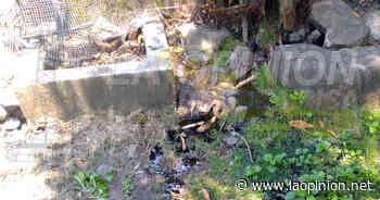 Se desatienden por sanear los cárcamos en Cerro Azul Cerro Azul, Ver. - La Opinión