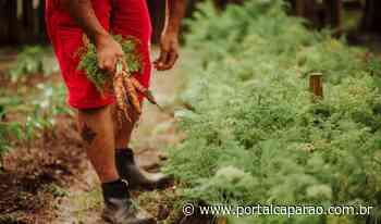 Do presídio para a mesa: horta em Caratinga produz 1 tonelada de alimentos por mês - Portal Caparaó
