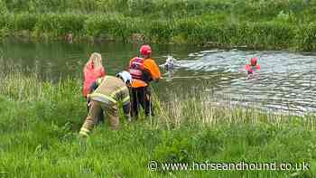 Mare found floundering in deep river after trespassers leave field gate open - Horse & Hound