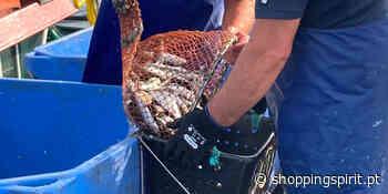 Pinhais celebra abertura da época de pesca da sardinha | ShoppingSpirit News - ShoppingSpirit News