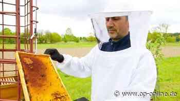 Rodgau: Angriff auf Honigbienen – 50.000 tote Tiere - op-online.de