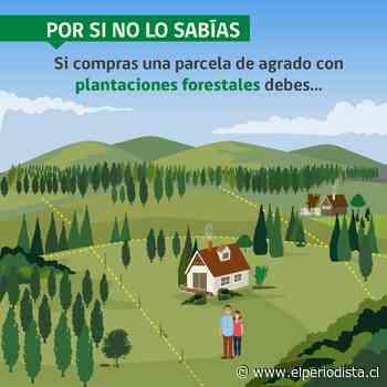 CONAF insta a propietarios/as de parcelas de agrado a cumplir con la legislación forestal - El Periodista