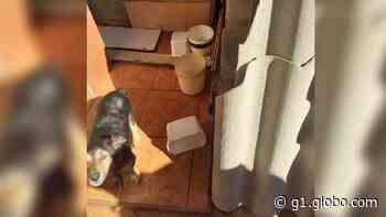 Mulher é detida e multada por maus-tratos a cães em Itapeva - G1