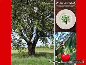 """Lezione di """"paesaggezza"""" sotto il grande ciliegio, domenica a Correggio - sassuolo2000.it - SASSUOLO NOTIZIE - SASSUOLO 2000"""