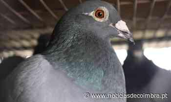 José Peseiro em Caracas espera que os seus pombos-correio cheguem a Portugal - Notícias de Coimbra