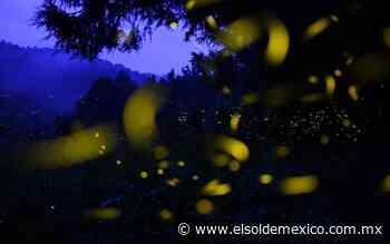 Amecameca se alista para el avistamiento de luciérnagas - El Sol de México