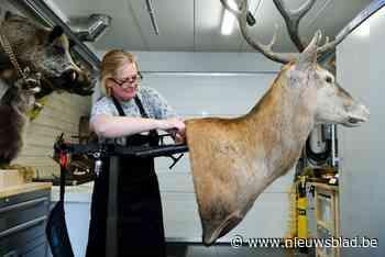 Er hangt een paard in de gang: taxidermist Ilse (45) oogst lof met opgezette merrie