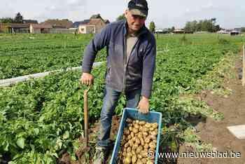 """Hobbylandbouwer Benny De Coster (60) maakt er sport van om met zijn primeuraardappelen import te snel af te zijn: """"Het is pure liefhebberij"""""""
