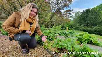 À Mont-Saint-Aignan, Ô Jardin change de saison et c'est tant mieux! - Paris-Normandie