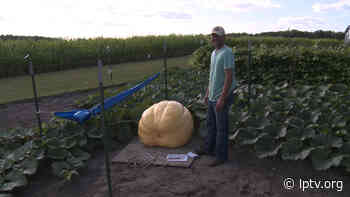 Common Ground: The Clearbrook/Gonvick community competes, growing GIANT PUMPKINS! - lptv.org
