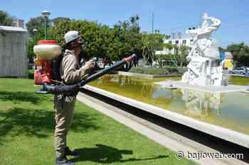 SSG notifica 2 casos de dengue no grave en Salamanca y Romita - Bajioweb