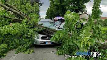 Incidente tra Marano e Oleggio: auto travolta da un albero, un ferito - NovaraToday