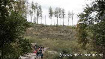 Waldsterben rundum Lahnstein: Wiederaufforstung wird Jahrhundertaufgabe - Rhein-Zeitung