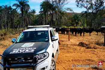 Polícia Civil de Patos de Minas recupera gado furtado em Nova Ponte - Patos Já