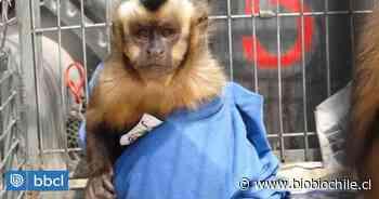 SAG de Tarapacá ha incautado 234 animales por tráfico y tenencia ilegal durante la última década - BioBioChile
