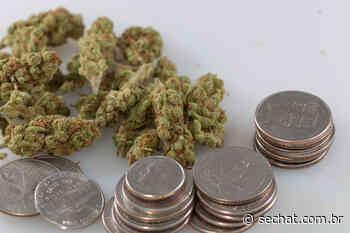 Colorado vende mais de meio bilhão de dólares em cannabis legal no primeiro trimestre - sechat