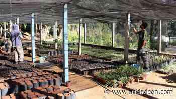 Serra Negra reativa viveiro de mudas de plantas nativas - ACidade ON