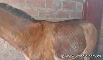 Investigan el posible ataque con ácido a dos animales en Marmato, Caldas - W Radio