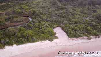 Obra em praia de Bombinhas rasga clareira no meio da restinga - NSC Total