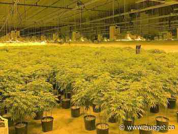 $12 million in cannabis seized from illegal grow-op in Chapleau - The North Bay Nugget