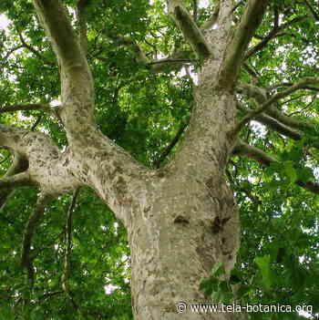 Reconnaître les arbres du Parc Georges Valbon de la Courneuve - Tela Botanica