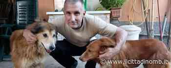 """Concorezzo, sette cani e sette gatti nella """"casa rifugio"""" di Franco Crippa - Il Cittadino di Monza e Brianza"""