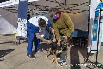 """""""Mascotas más felices"""" pasó por el barrio San Isidro de Boulogne - InfoBan"""