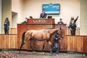 GOFFS UK SPRING STORE SALE: Buoyant market leads to record outcome - The Irish Field